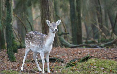 55 / 2018 Technische Hilfe Tierrettung