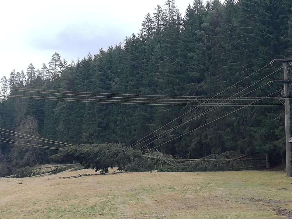 04 / 2021 Baum in Hochspannungsleitung