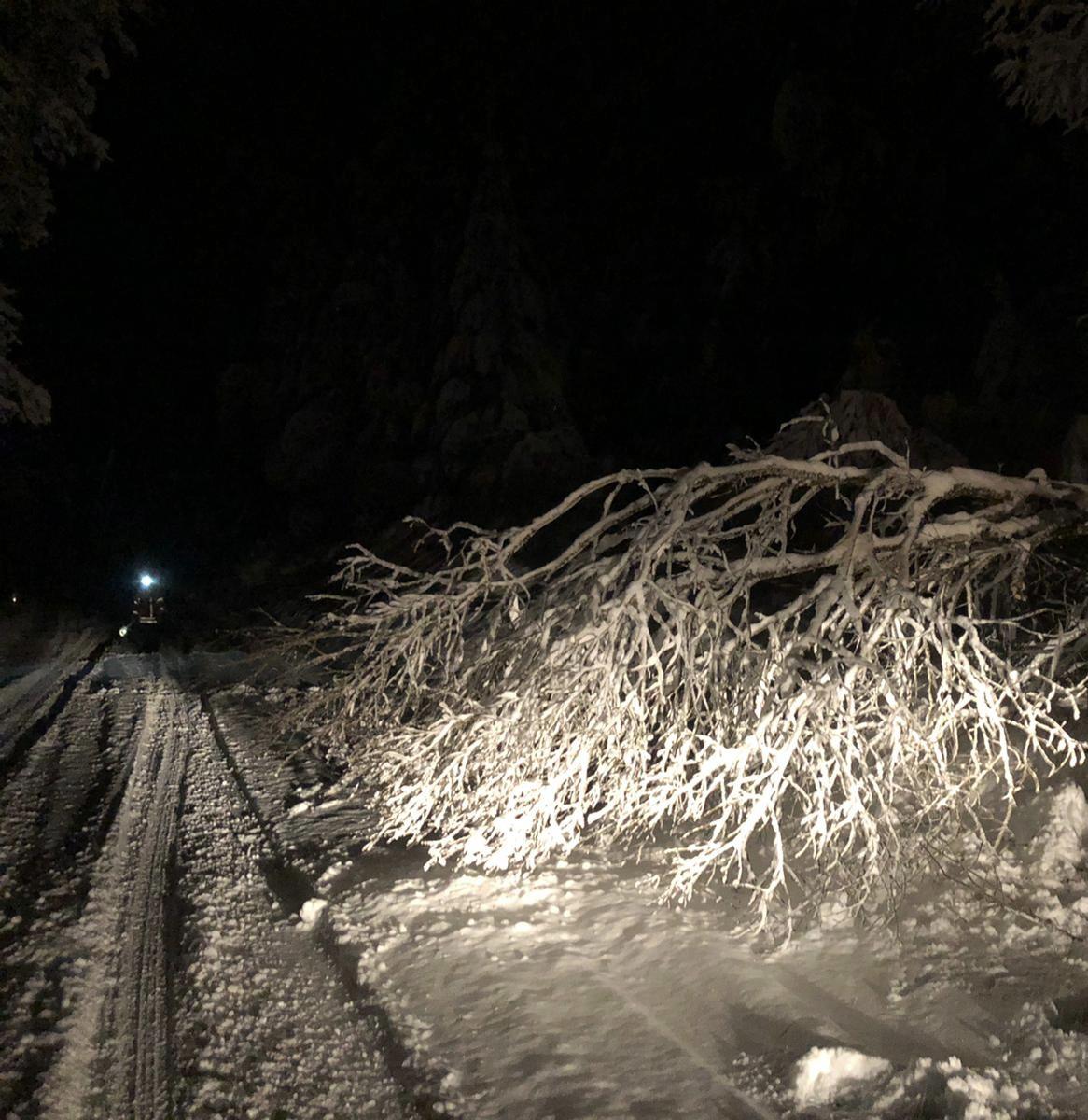 10 / 2021 Baum auf Fahrbahn